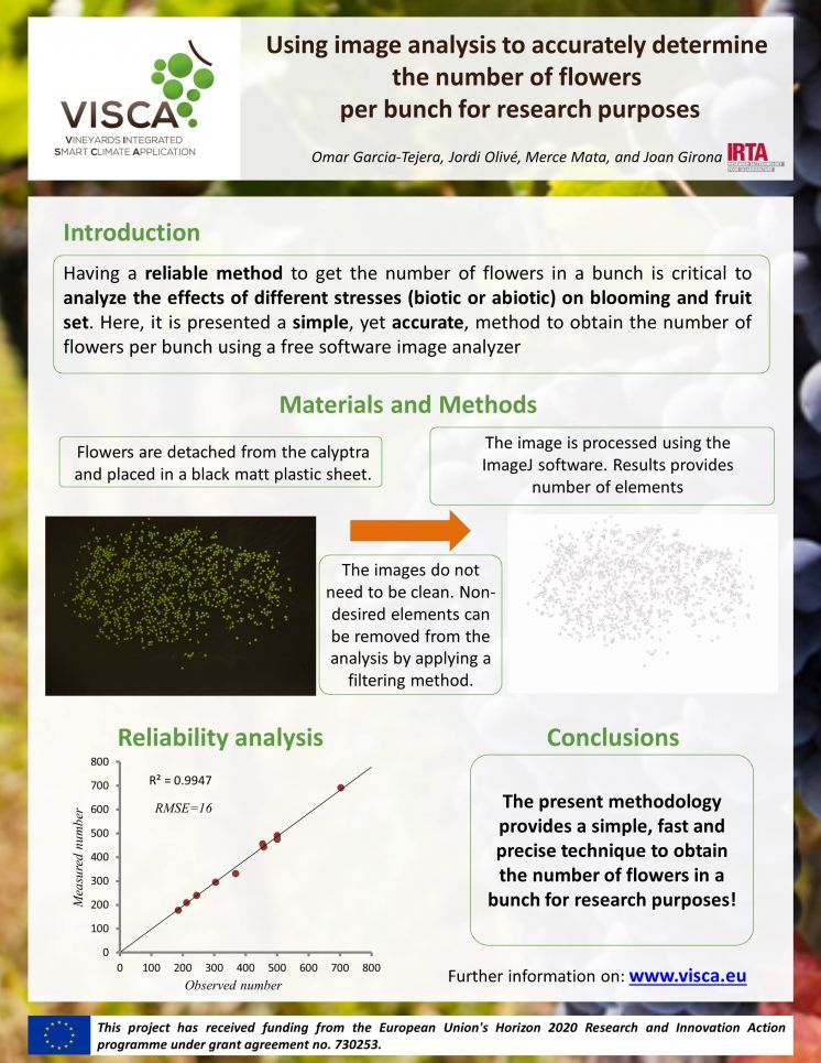 Using image analysis to accurately determine the number of flowers per bunch for research purposes