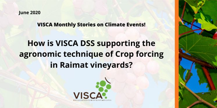 How is VISCA DSS supporting the agronomic technique of Crop forcing in Raimat vineyards?