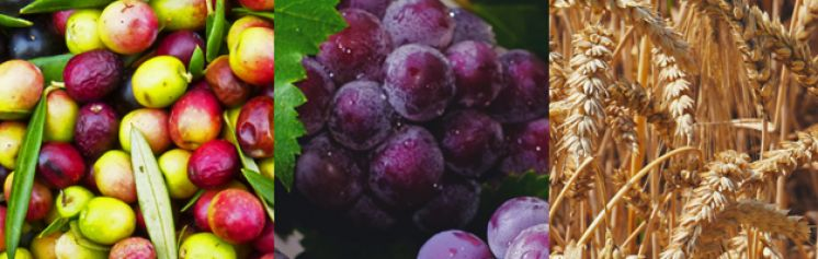 Replicability of VISCA: Wine-grapes, Olives & Cereals – Challenges, Requirements and Funding