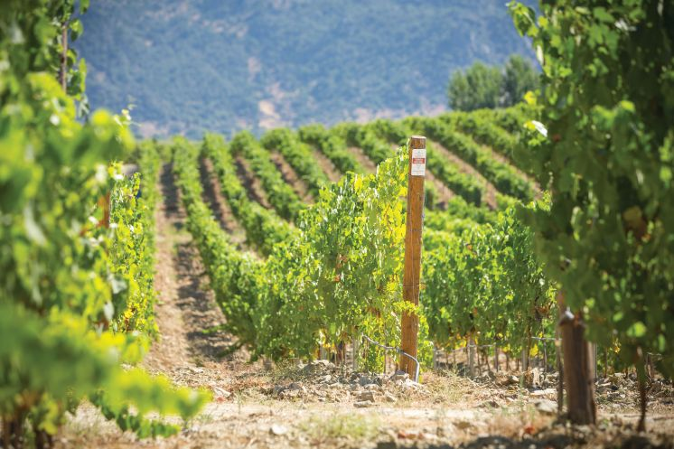 How will climate change affect the viticulture in the coming decades in Europe?